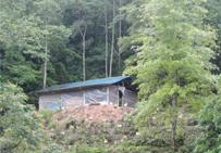树林的鸡棚